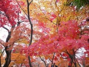 kyotokouyou-onsen